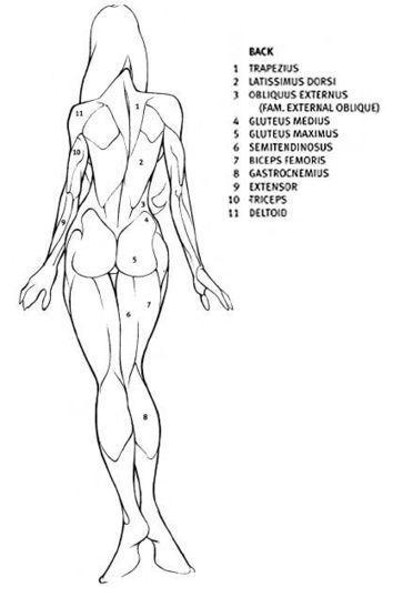 muscoli schiena donna