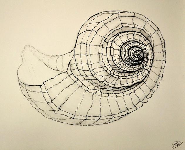 cross-contour-drawing-shell